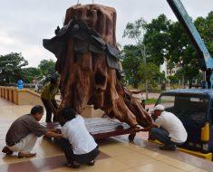Đưa gốc cây sưa ở sông Troóc vào bảo tàng